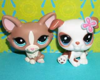 DOG LOT~BULLDOG #2106 & CORGI FOX #1864~Littlest Pet Shop V57