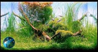 Weeping Moss  Live Plant for Glass Aquarium Fish Tank