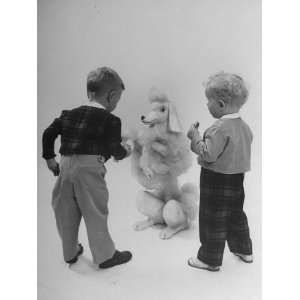 Two Small Boys Modeling Small Boys Fashion Photographic