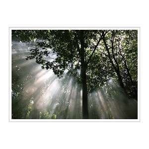 Oversized large wall art   Sun through Forrest Trees