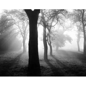 Trees In the Fog I   Poster by Tom Weber (35.5X27.5): Home