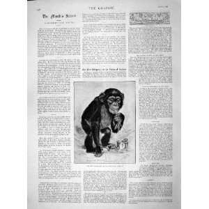 1892 Chimpanzee Monkey Zoological Gardens London