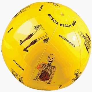 Education Balls Large Play   Muscle Beach Ball