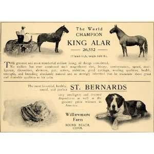 1905 Ad World Champion Horse Bernards Willowmere Farm
