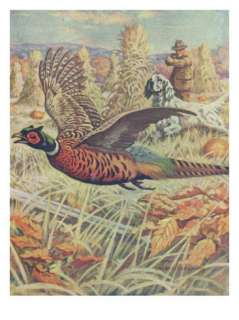 National Sportsman   View of a Hunter and Spaniel Pheasant Hunting